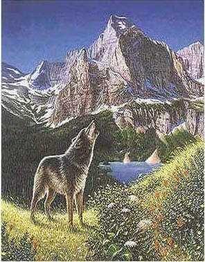 skolko-volkov
