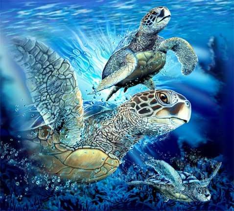 Сколько черепах?